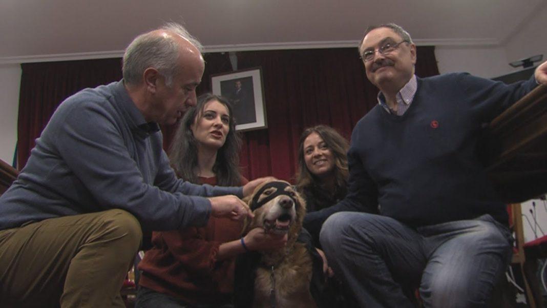 As mascotas serán as protagonistas no Cannaval de Vilanova