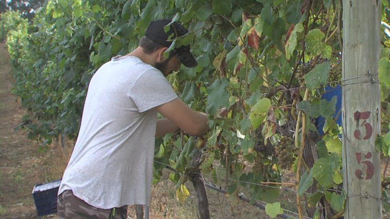 Unións Agrarias reclama a Mesa do Viño para evitar a especulación en Rías Baixas